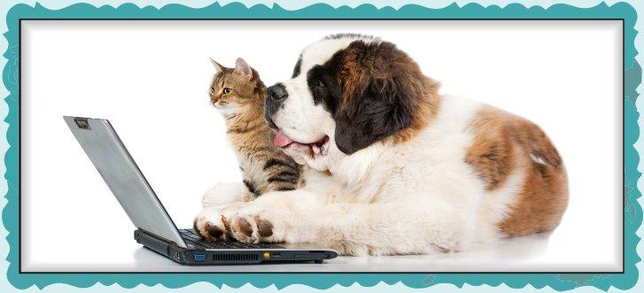 Book Appointment Online | PawParazzi Pet Boutique | Richmond